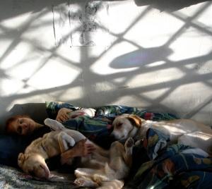 Diamond shadows drift above sleeping maid and dreaming dogs.
