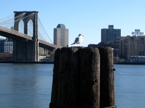 A seagull perched on wood overlooking the East River, near Brooklyn bridge.